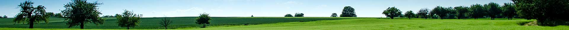 landscape view of field with trees with blue sky