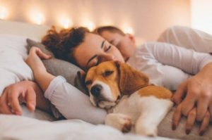 Young adult Male and female couple laying on bed cuddling their beagle dog